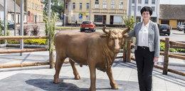 Bitwa byków na głosy