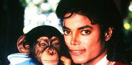 Będzie film o małpie Jacksona