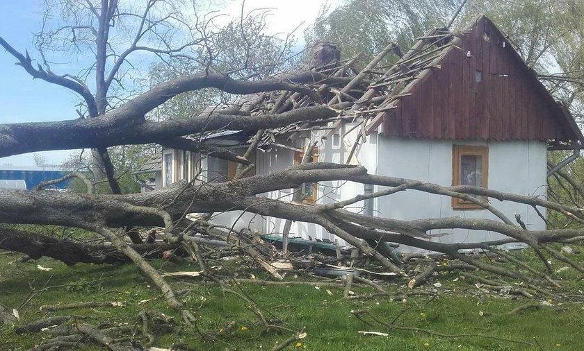 Drzewo zwaliło się na dom w Stubnie