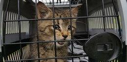 Chcieli zabić kałem tego kotka z Suwałk? Co za okrucieństwo!