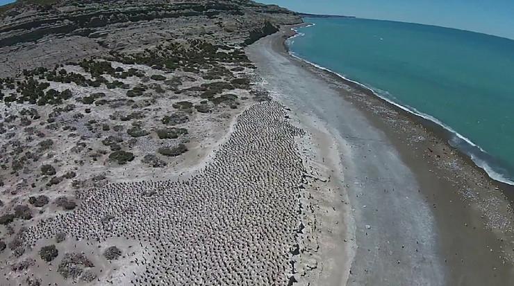 585484_pataganija-foto-youtube-carlos-zavalaga-2
