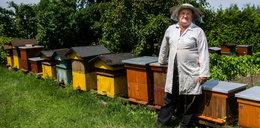 Pszczoły padły przez opryski?