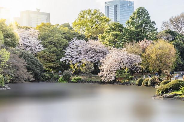 Tokio jest miastem pełnym parków
