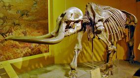 10-latek przypadkiem znalazł liczące sobie ponad milion lat szczątki dinozaura