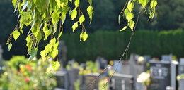 Ktoś wlewa chemię do drzew na cmentarzu