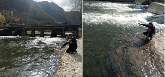 Ribolovci hvataju potočne pastrmke, mladice i lipljen