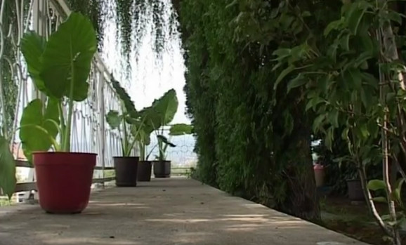 Pirot, pošumljena terasa pekara Dobrice