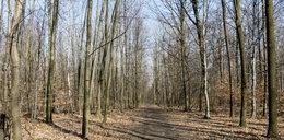 Katowiczanie nie chcą drogi w lesie