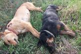 Milan Bogdanović Facebook screenshot, ubijeni psi u Surčinu