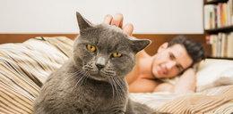 Mamy złe wiadomości dla właścicieli kotów. Chodzi o  COVID-19!