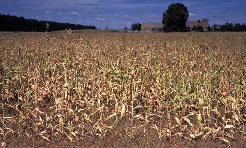 Rolników czeka katastrofa. Tak źle nie było od lat