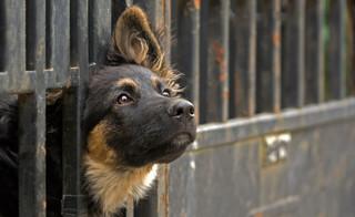 Wydatki liczone w milionach, tysiące zwierząt w schroniskach. Jak działa system opieki i zwalczania bezdomności [WYWIAD]