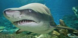 Atak rekina: uciec z paszczy drapieżnika. Przerażające historie