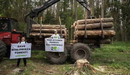 Protest ekologów. Przykuli się do drzew w Puszczy Białowieskiej