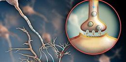 Komórki leczą układ nerwowy