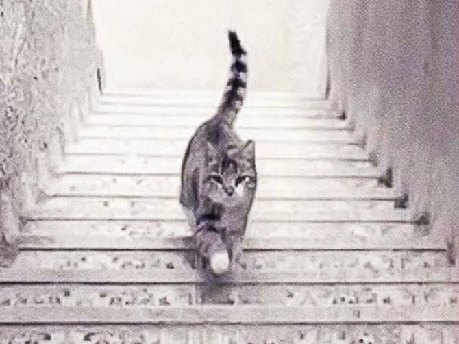Dobro pogledajte sliku i kažite da li maca ide UZ ili NIZ stepenice: Odgovor otkriva BITNU STVAR O VAMA