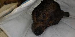 Wolontariusze pomagają cierpiącemu psu. Facebook ich blokuje
