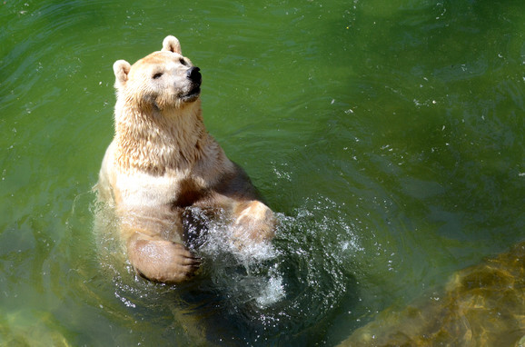 U planu i gradnja Zoo vrta