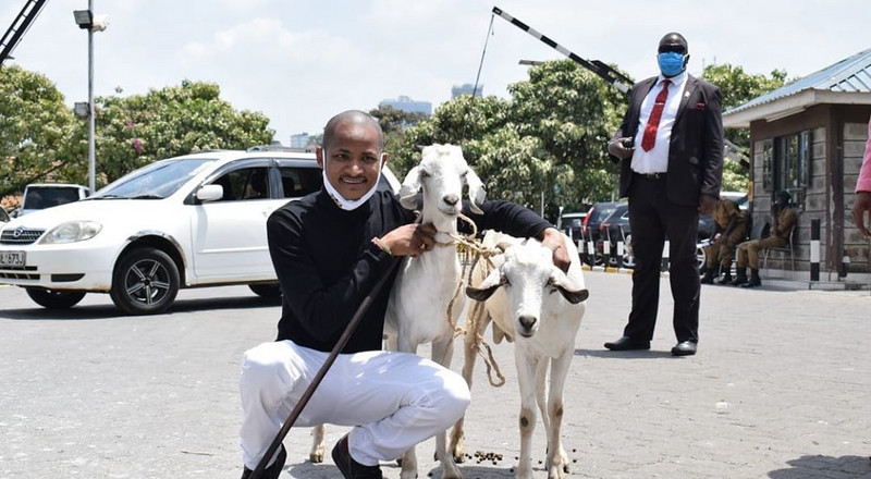 Kenyans react as Babu Owino names his two goats 'Raila and Uhuru'