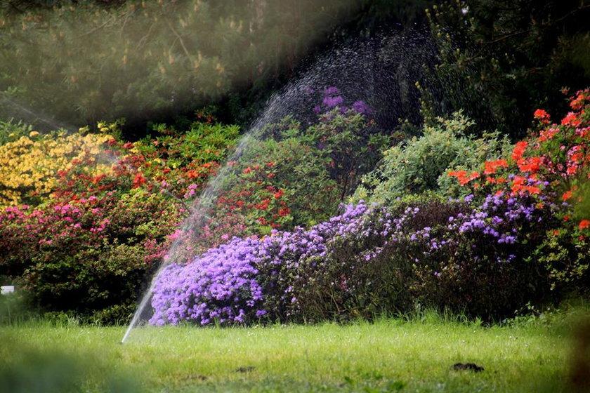 Arboretum Kórnickie zakwitło