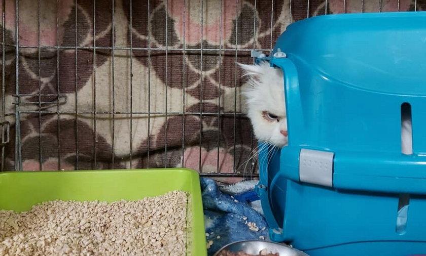 Ktoś podrzucił kota na teren prywatnej posesji.