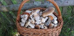 Zbierali grzyby w lesie. Teraz mają poważne problemy