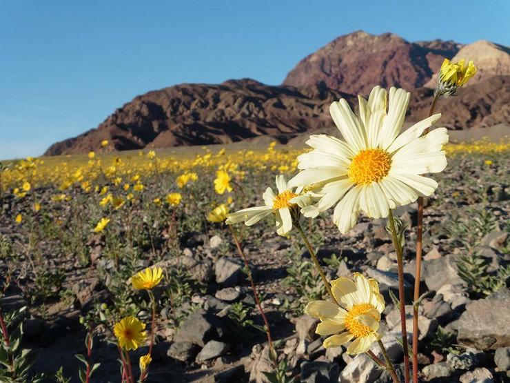 dolina smrti foto Facebook Death Valley National Park Alan Van Valkenburg