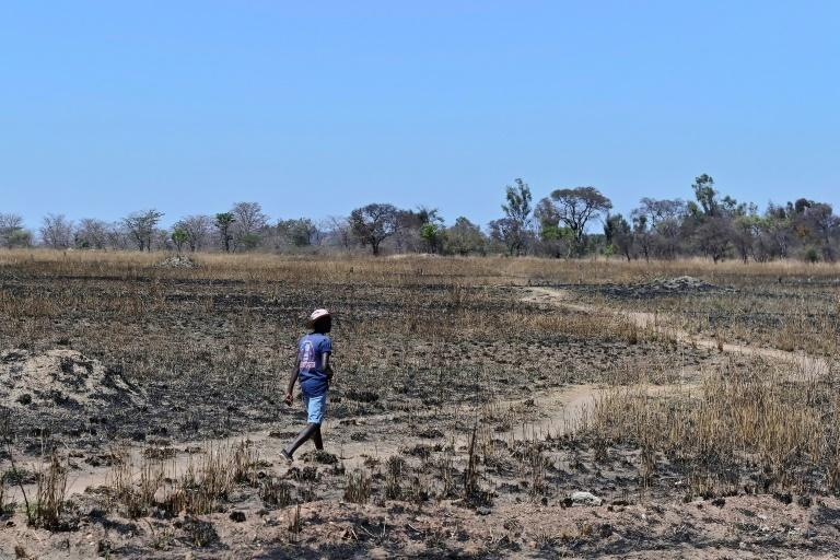Of the 4,200 white farmers counted in Zimbabwe's last population census in 2000, only 400 work land in Zimbabwe, according to Freeth