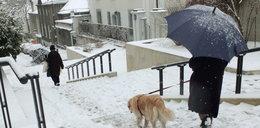 Obfite opady śniegu. Sprawdź, gdzie sparaliżuje miasta