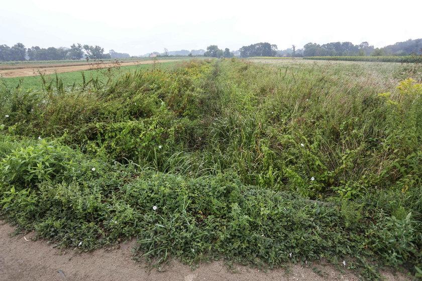 Dramat rolników. Nie chcąc oczyścić kanału w Powsinie