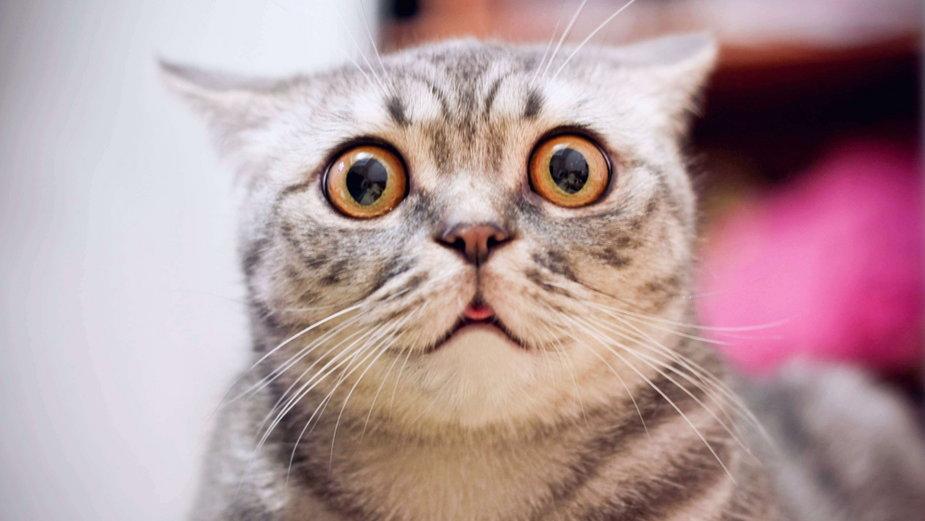 10 najgroźniejszych trucizn dla kota