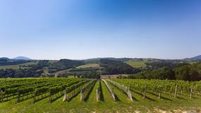 Małopolski Szlak Winny zaprasza do odwiedzania winnic i degustacji