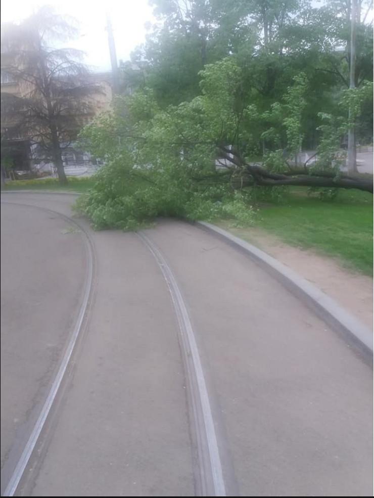 oboreno drvo