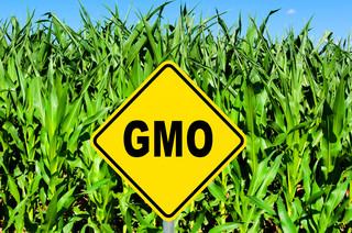 Ustawa wydłużająca możliwość stosowania pasz GMO o dwa lata do podpisu prezydenta. Senat nie zgłosił poprawek