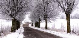 Wir polarny przyniesie nam mroźną zimę?