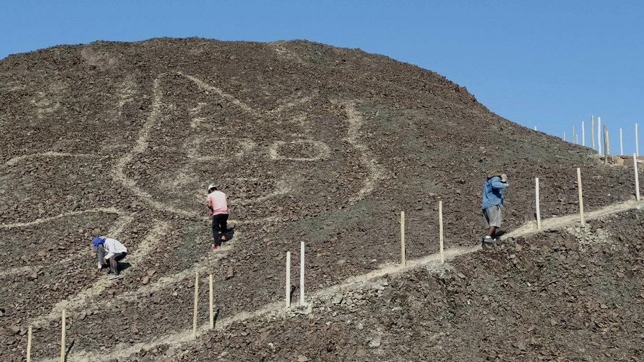 Olbrzymi wizerunek kota znaleziony w Nazca