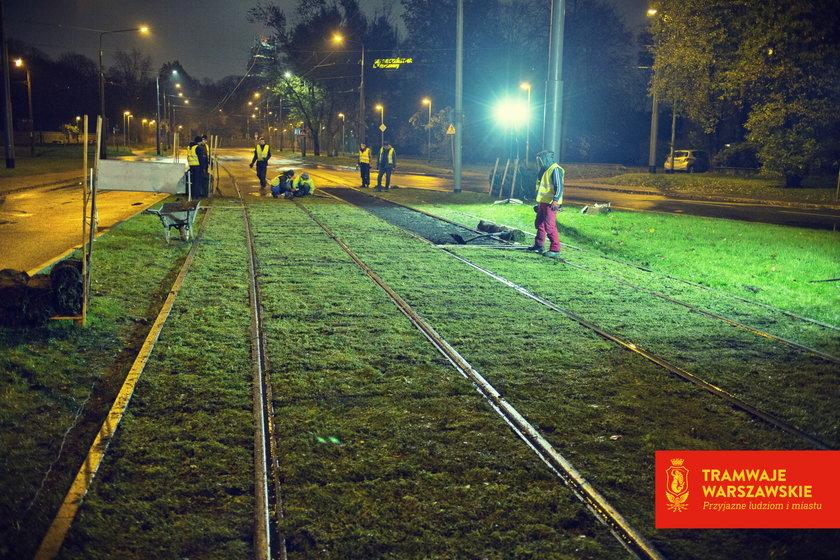 Tramwajarze nie śpią, bo układają trawę