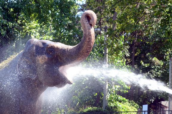 I njima treba rashlađenje: životinje u Beogradskom zoološkom vrtu