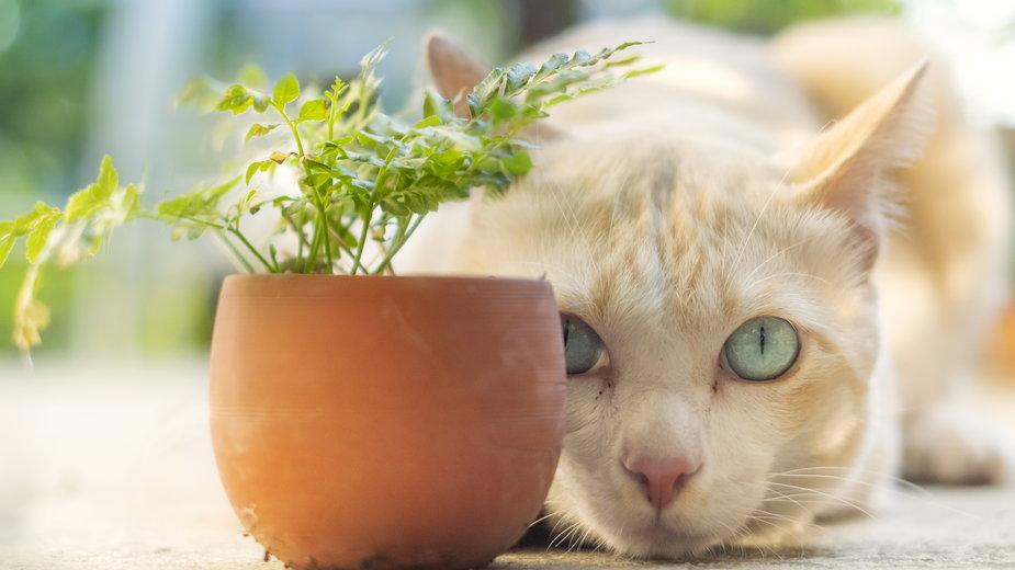 U kotów po kastracji zachodzą zmiany w organizmie i w zachowaniu - noppadon/stock.adobe.com