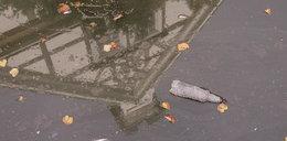 Kanał w centrum Gdańska tonie w śmieciach!