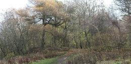 Tajemnicze znalezisko w szkockim lesie. Obok listu po polsku była zakrwawiona rzecz