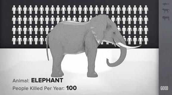 Čak i slon godišnje ubije više ljudi nego ajkula