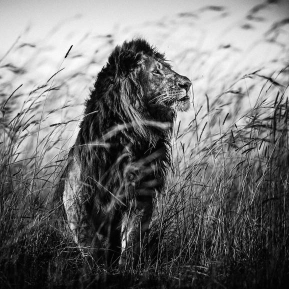 FOTO: Laurent Baheux