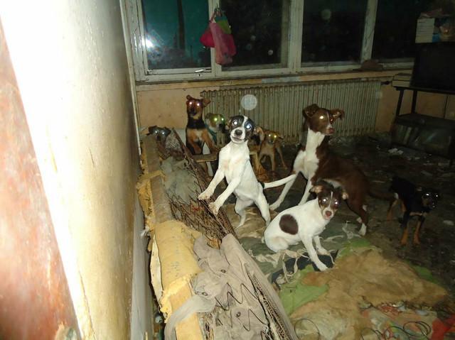 Inspekcija je nekoliko puta odvodila pse iz stana, ali ih je Jelena vraćala