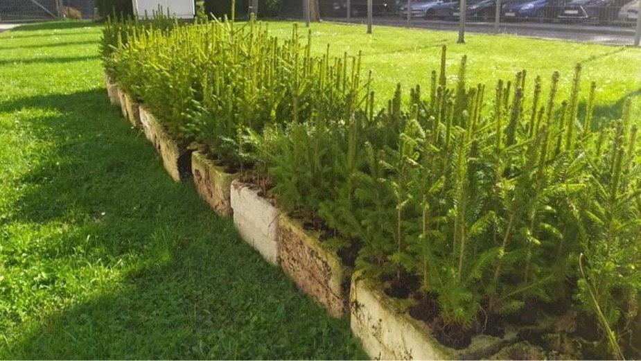 Pietrzykowice zasadzą 700 drzew na 700-lecie wsi