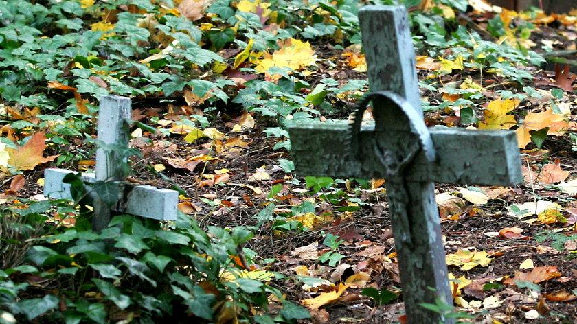 Na cmentarzu wykarczowano drzewa razem z nagrobkami. Zniszczenia dokonał proboszcz