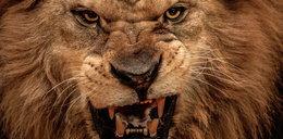 Pogłaskała lwa, a on odgryzł jej rękę
