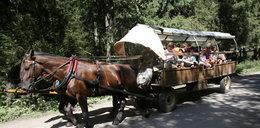 Badają konie aparatem RTG