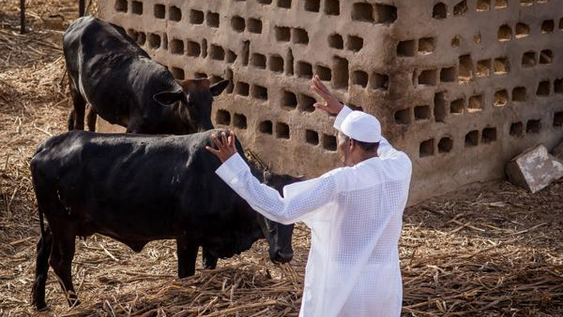 President Muhammadu Buhari on his farm in Daura, Katsina State [Presidency]