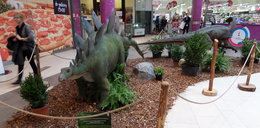 Tropem dinozaurów
